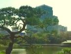 Fritz's gardens in Japan